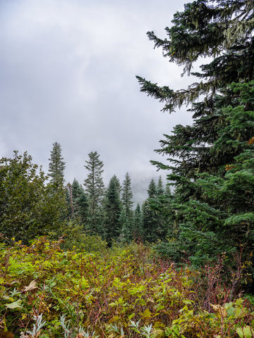 Woods, rain, weather, sun, beautiful, moody, Washington, moody shots