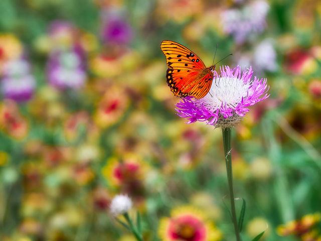 Spring flowers, butterfly, butterflies, nature, houston, arboretum, pandemic, covid 19, corona virus