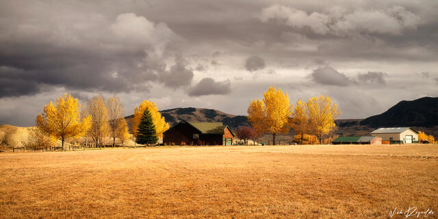 Golden trees and fall landscaping around a red home in the mountains of Colorado.