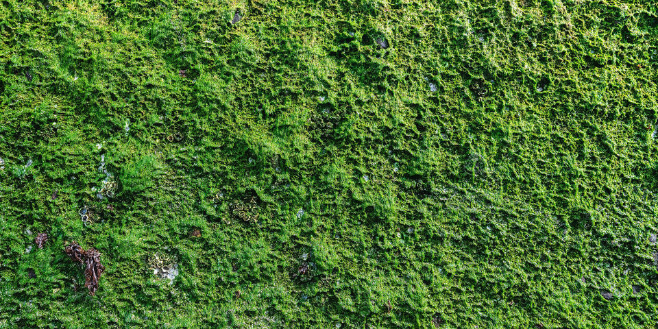 Moss, mosses, details, small, flowerless plants, dense, green, plants, leaves, vascular, plants, seeds, fine art, limited edition, details, colors, textures, abstract, rich, Pacific, Northwest