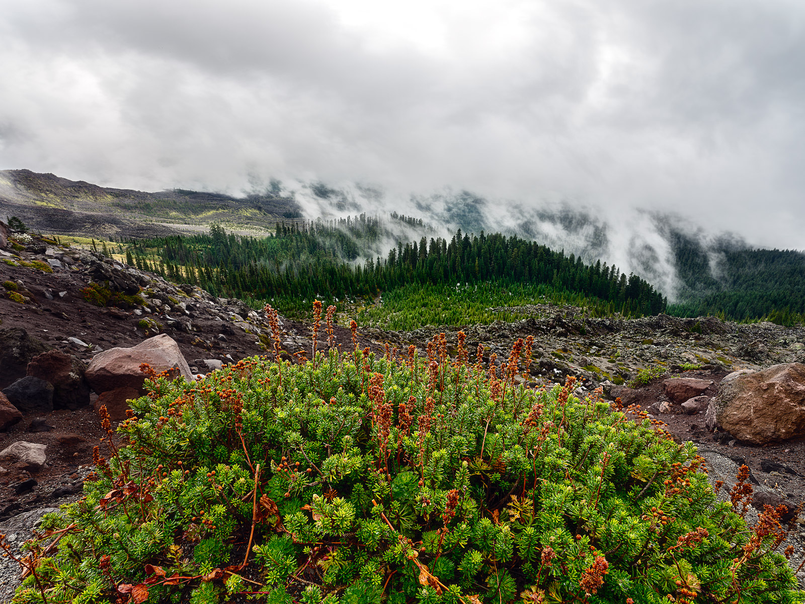 Looking down from the top of the volcano towards shrubs and clouds touching and coming out of the trees.