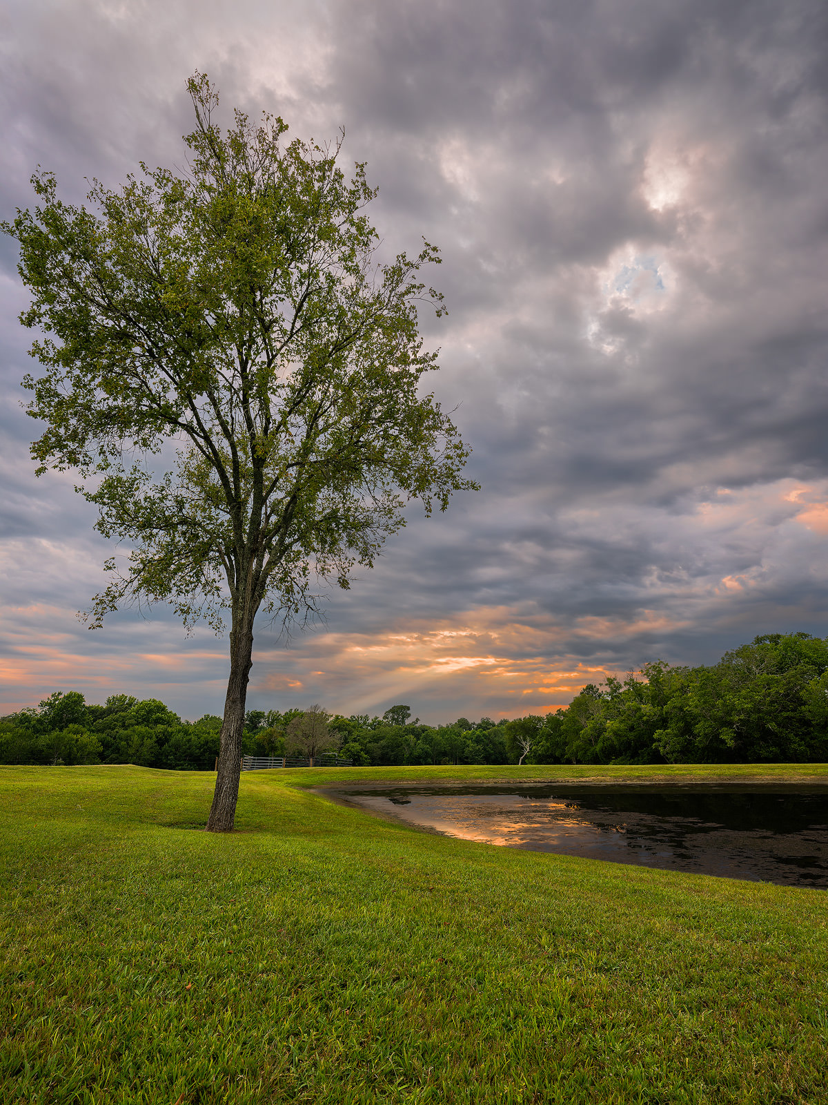 Land, East, Texas, Countryside, ponds, lakes, green, trees, grass, photo
